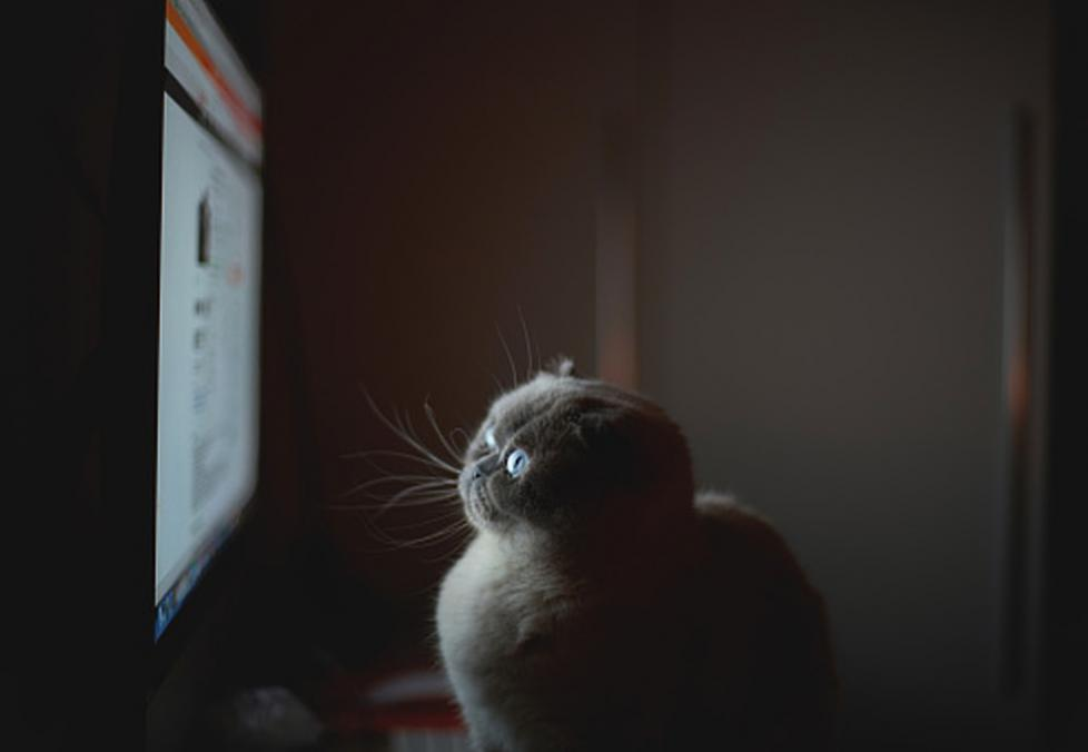 cat staring at a computer